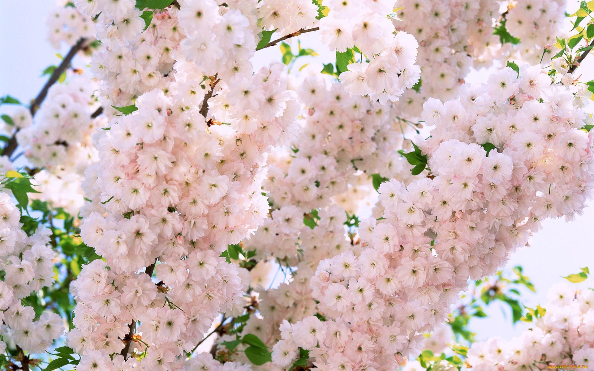 презервативов фото цветы формата таких
